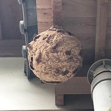写真:ハチ駆除前